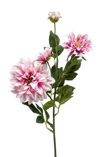 Dahlia licht paars