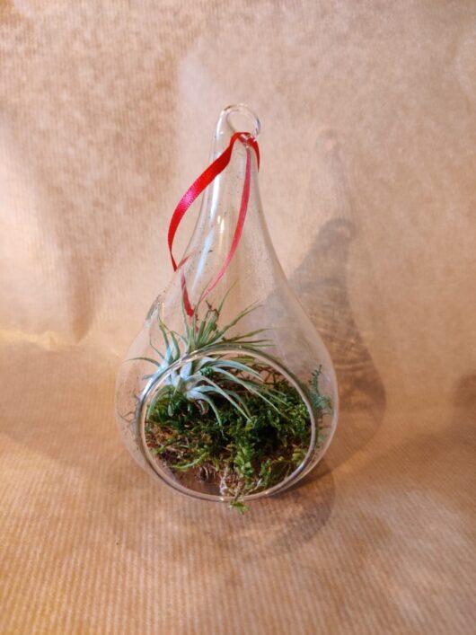 Druppelhanger met luchtplantje