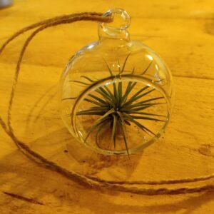 Glazen bal met tillandsia