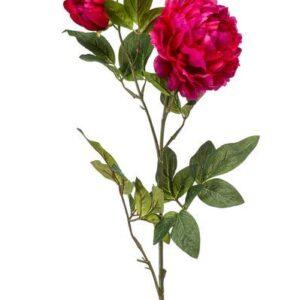 Pioenroos (Peony) donker roze
