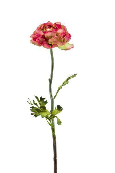 Ranonkel (Ranunculus) roze/groen