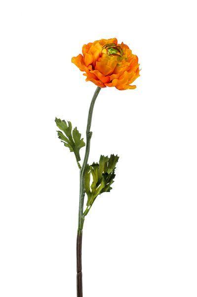 Ranonkel (Ranunculus) oranje