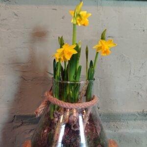 Narcis in glas