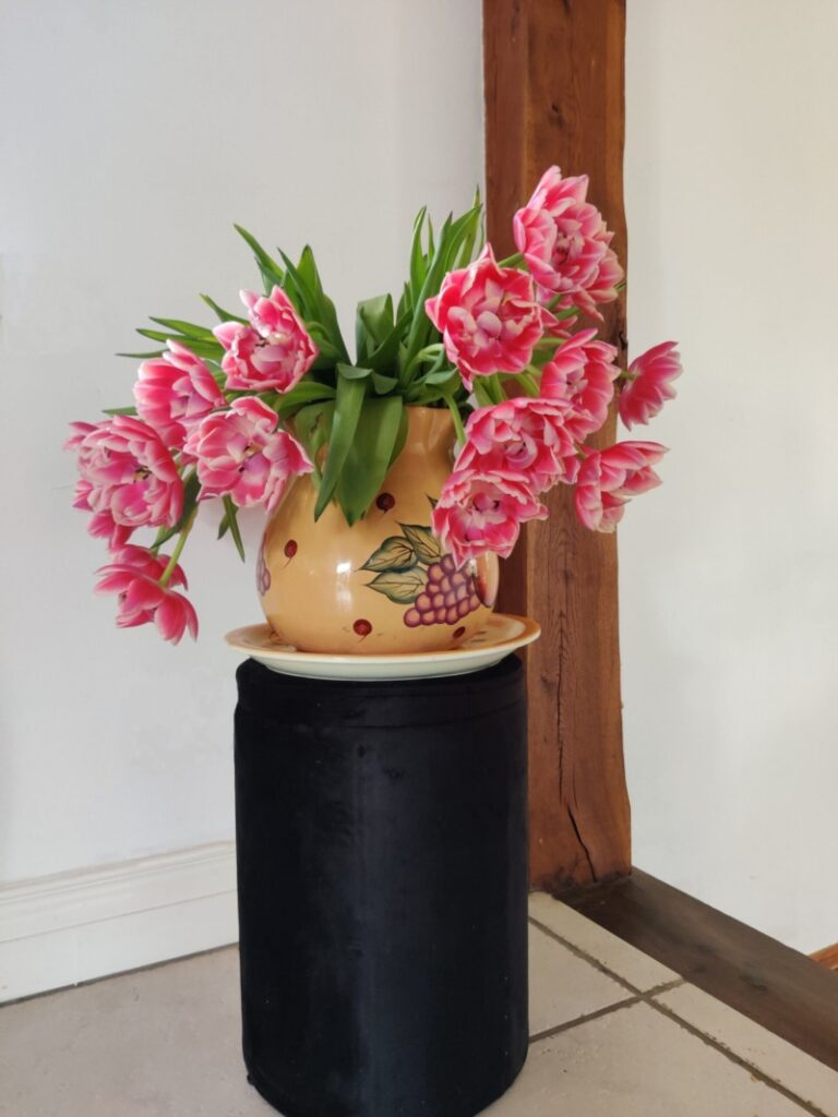 Tulp columbus