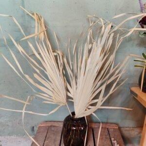Gedroogd palm blad
