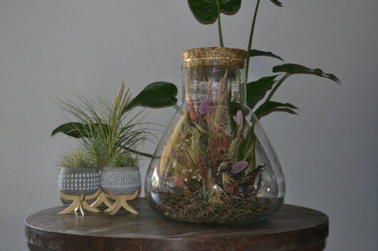 droogbloemen stolp