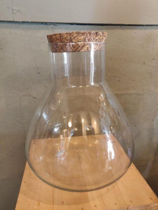Deze glazen stolp is zeer geschikt voor het opzetten van een plant terrarium.